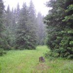 revervat_beglika_046